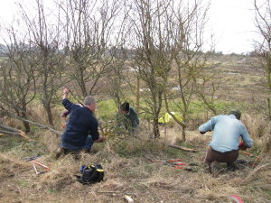 Volunteers completing hedge laying