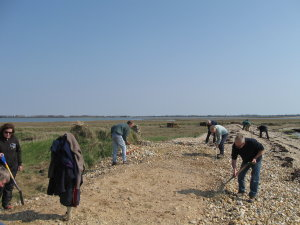 Volunteers re-profiling shingle beach