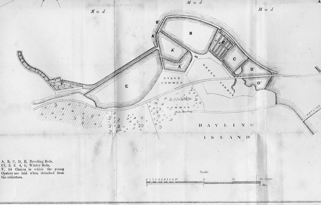 Late 1860s map of Oyster bed layout